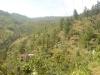 bukitsubaya5.jpg