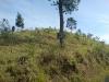 bukitsubaya2.jpg