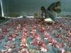Penataan paket-paket daging qurban